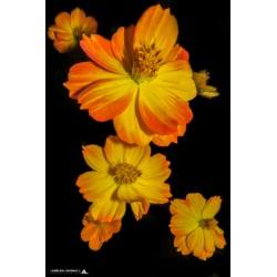 Série _ Florale